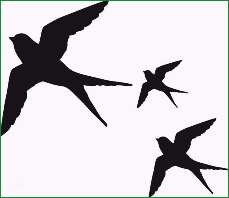 vogel silhouette fenster glas vogelsicher