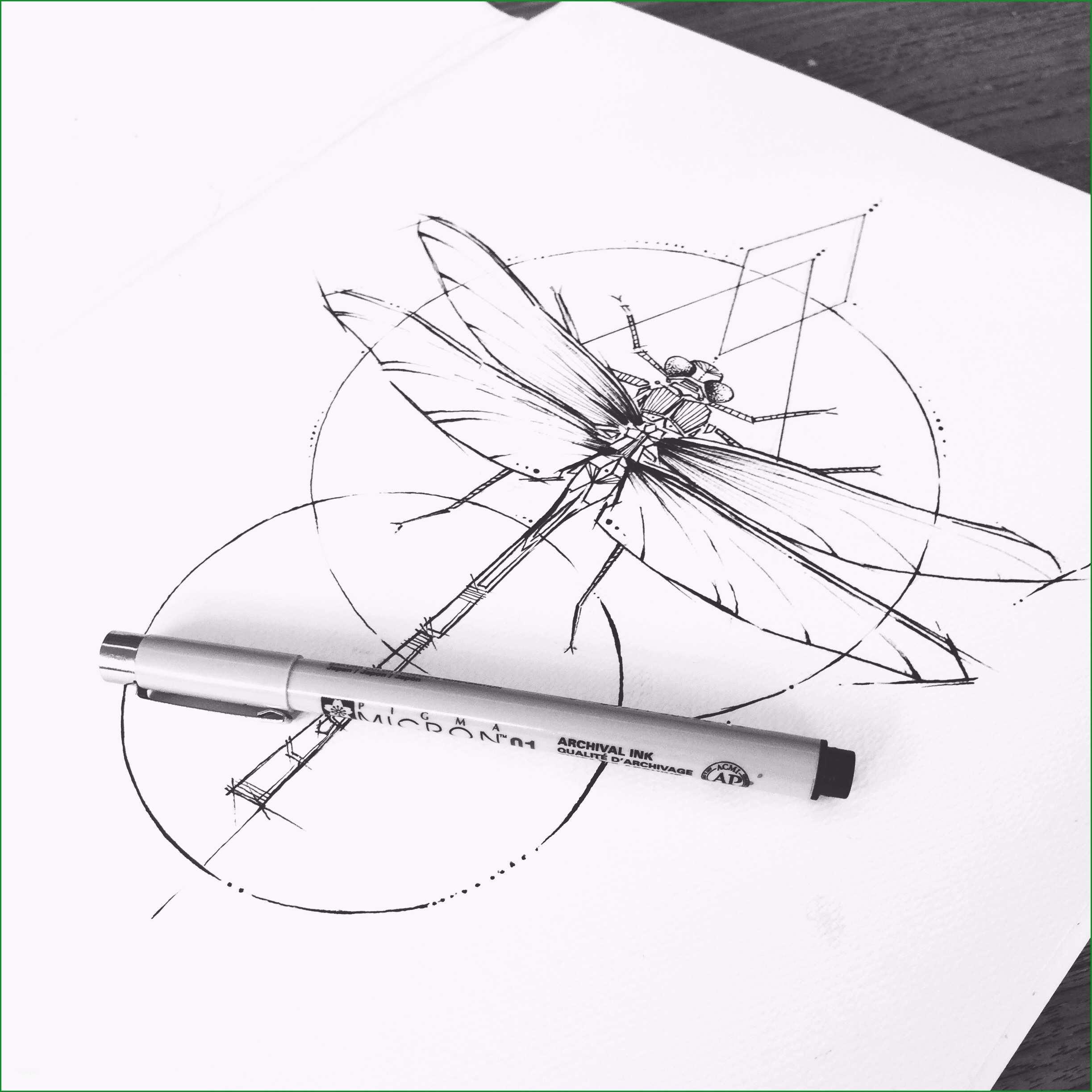 dragonfly diagram elegant animal diagrams dragonfly unlabeled parts