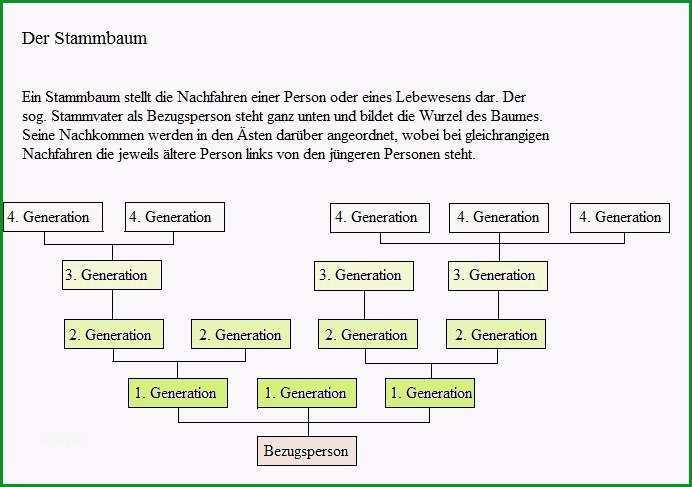 stammbaum vorlage word
