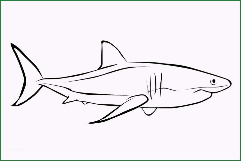 malvorlagen fisch ausmalbilder 3