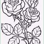 Schockieren Rosen Malen Vorlagen