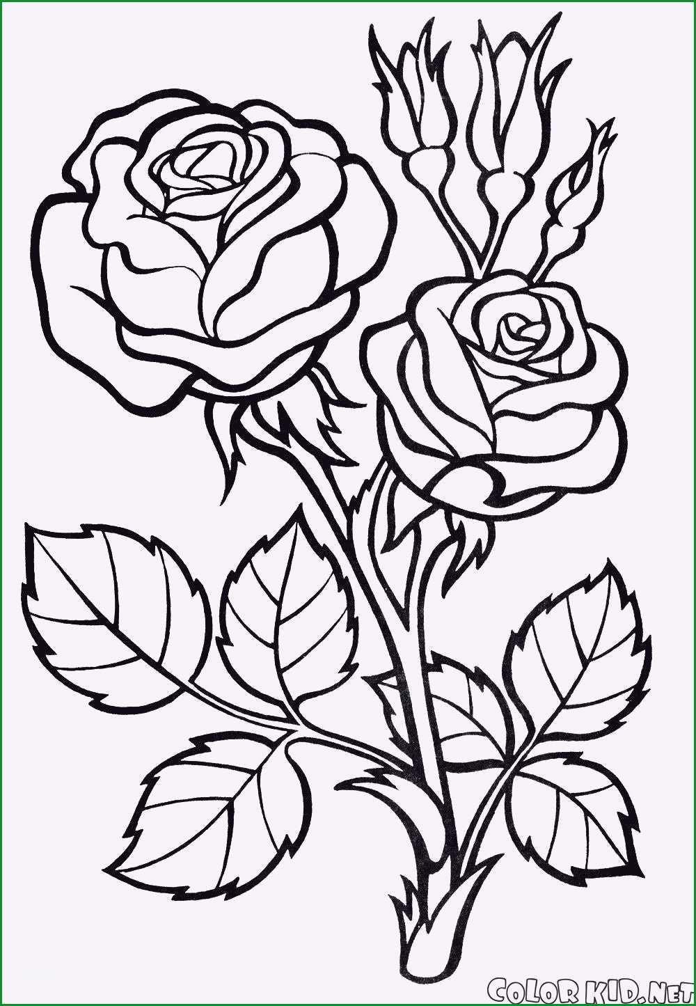 Ccmart Kunststoff Zeichnen Malen Schablone 4