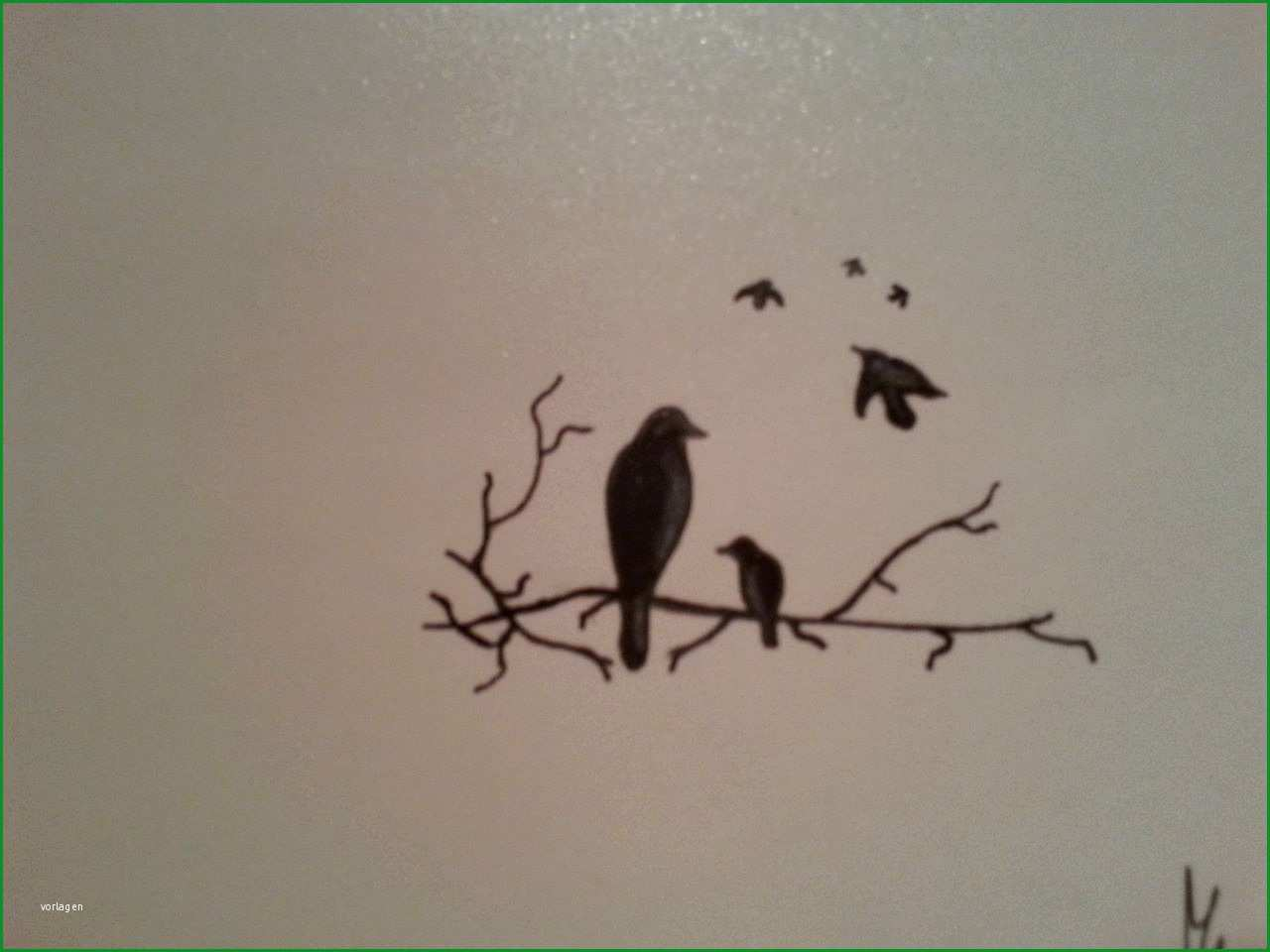Selten Vögel Tattoo Vorlage Vogel Äste Zeichnungen Von