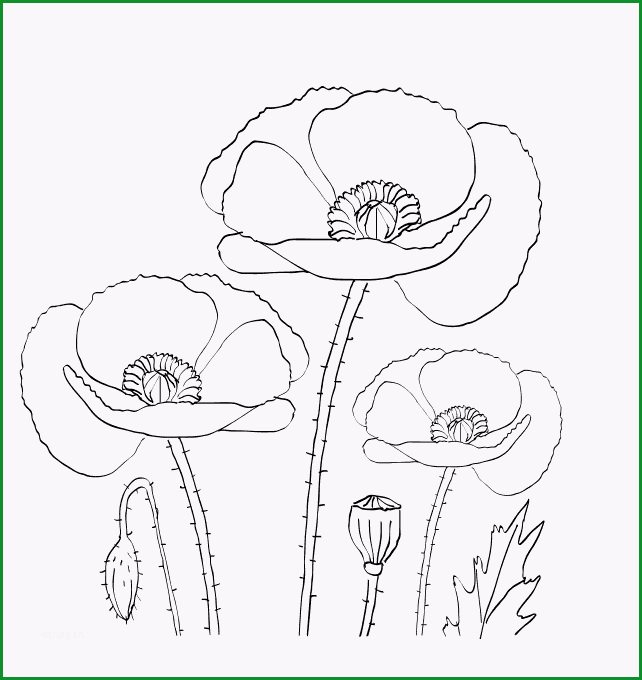 Pin Von Esmide Haurissa Auf A Look At Poppies