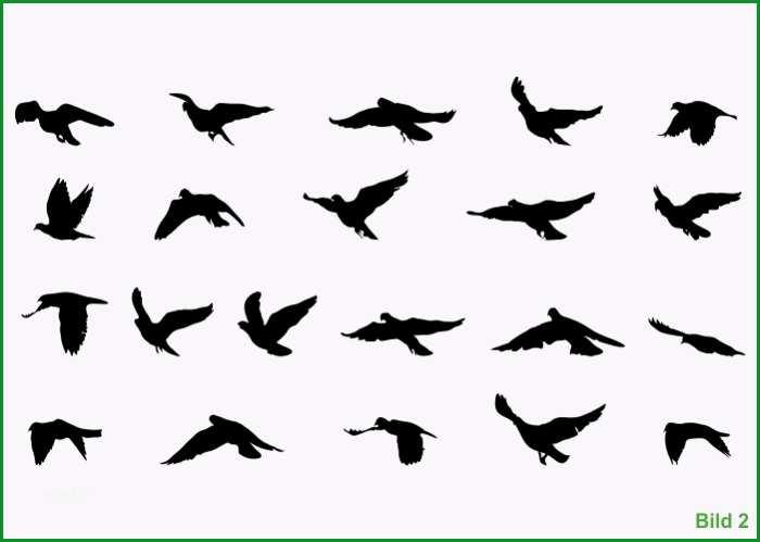 wandtattoo vogelschwarm tauben 21 stk